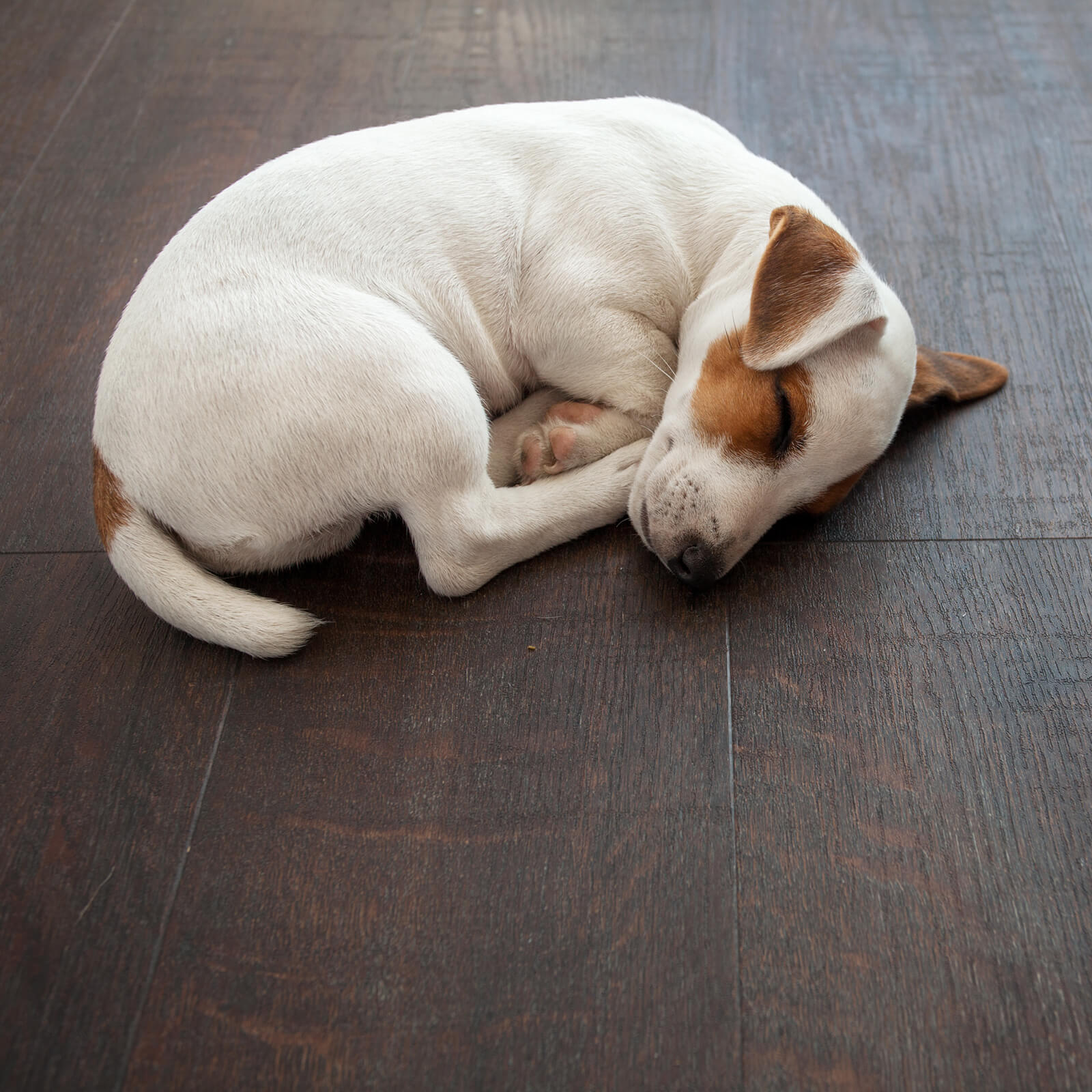 Pet friendly Luxury Vinyl Laminate | BMG Flooring & Tile Center