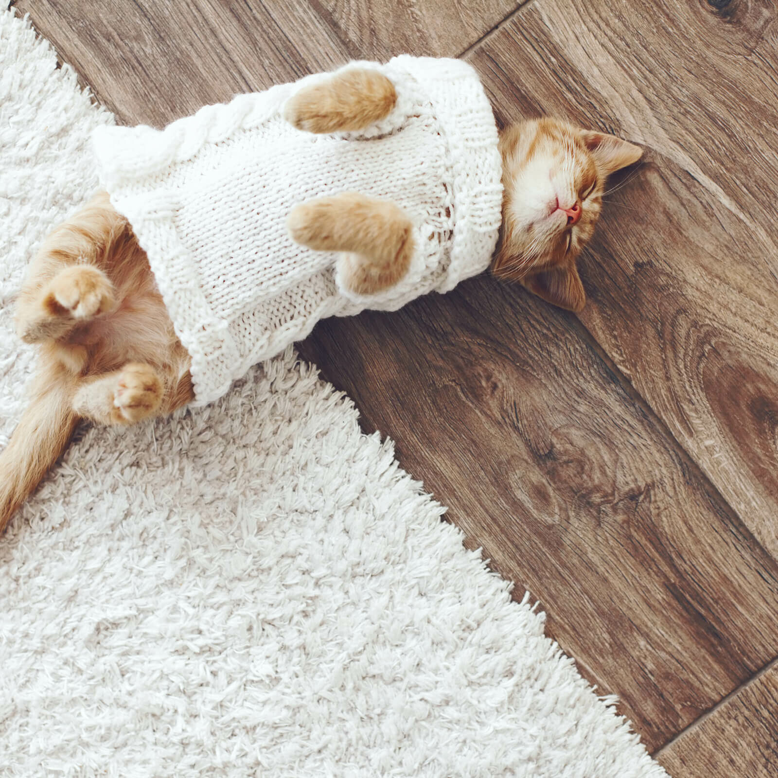 Cat sleeping on Floorte Hardwood | BMG Flooring & Tile Center